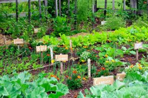 Secrets-of-a-High-Yield-Gardening
